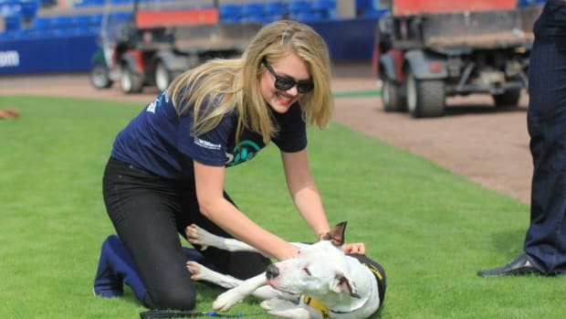 kate upton puppies baseball tigers nationals