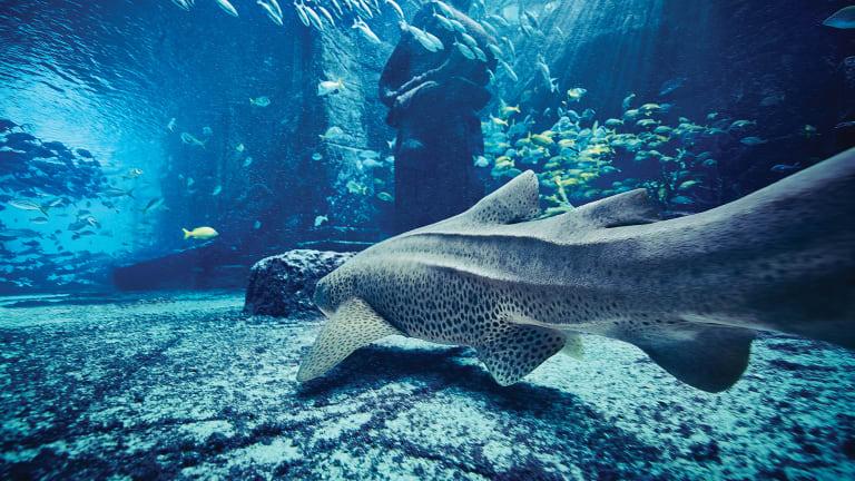 The Dig Marine Habitat Tour with Dave Wert