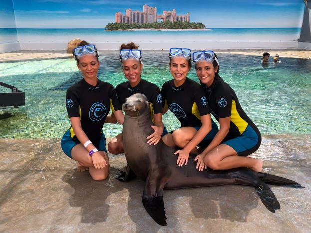 dolphins-8.jpg