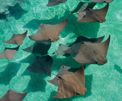 Stingray_Lagoon_95_Med - GALLERY.jpg