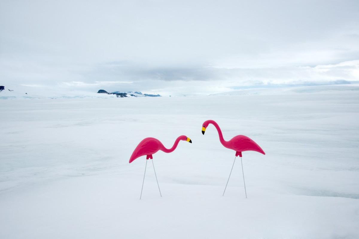 antarctica-photos-9.jpg