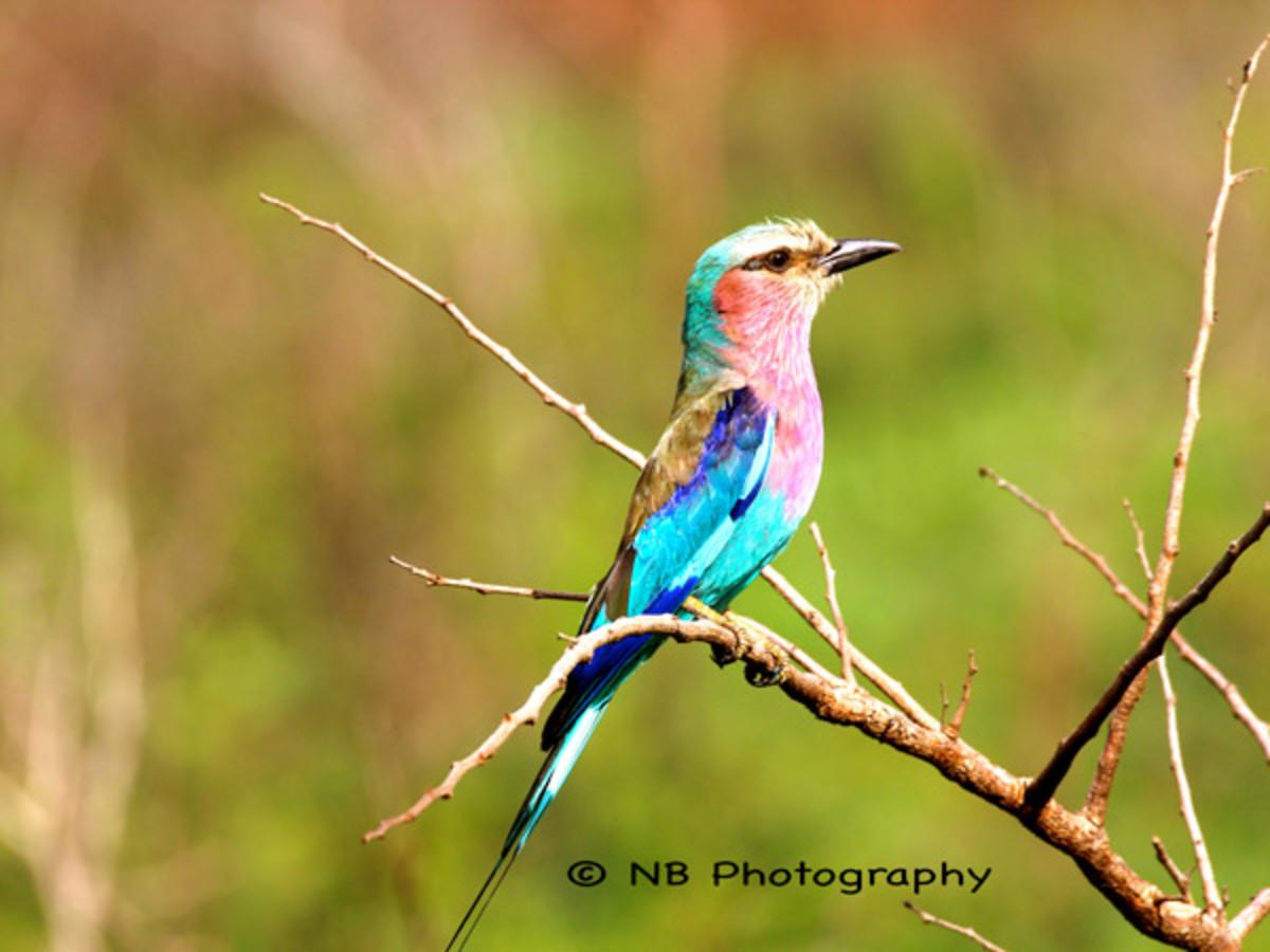 natasha-barnard-wildlife-4.jpg