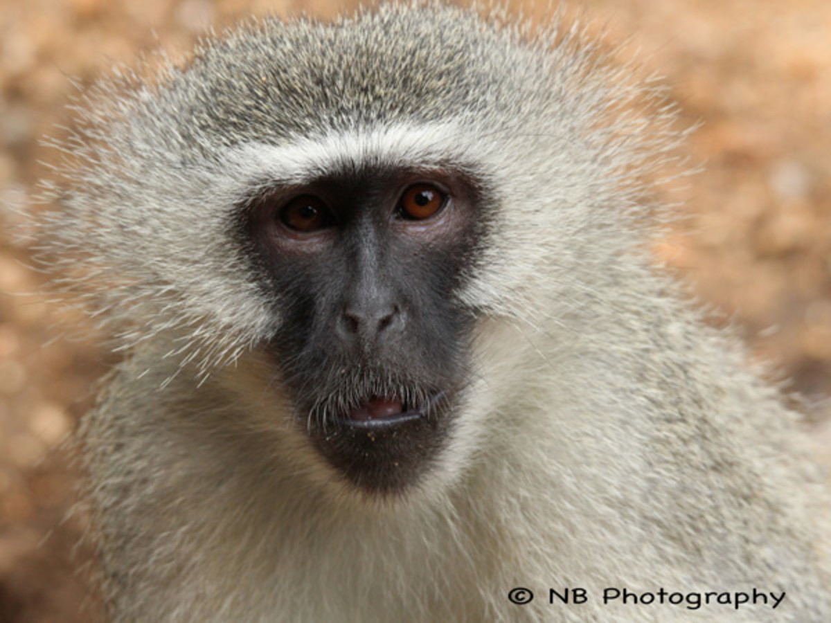 natasha-barnard-wildlife-7.jpg