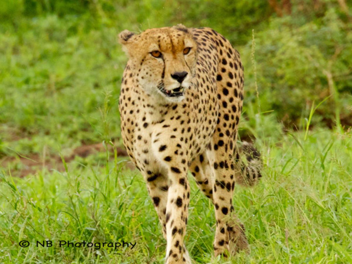 natasha-barnard-wildlife-3.jpg