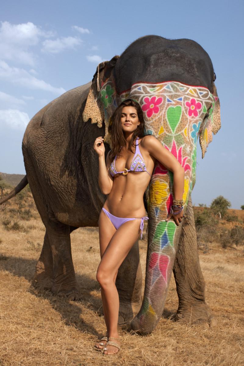 animals-hilary-elephant.jpg