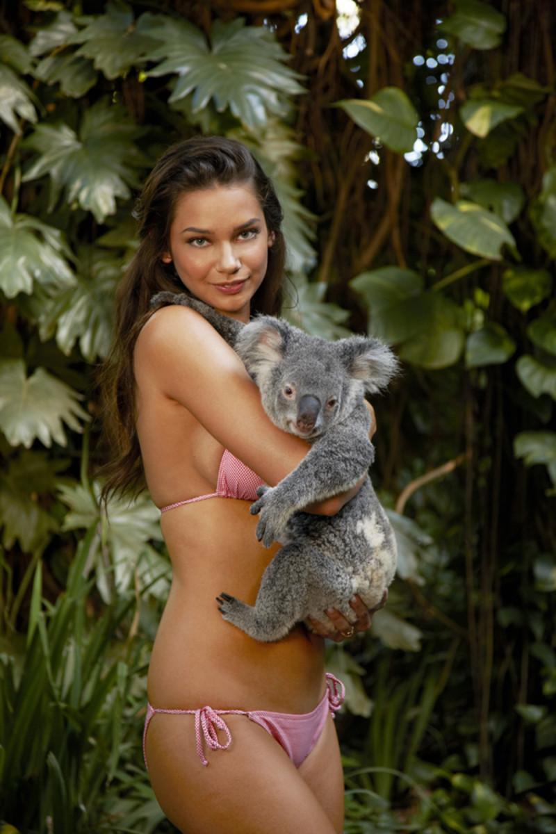 animals-michelle-v-koala1.jpg