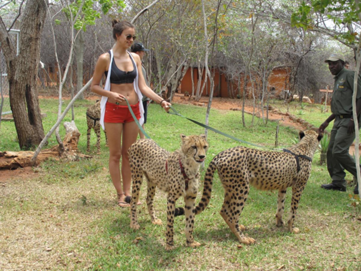 animals-irina.jpg