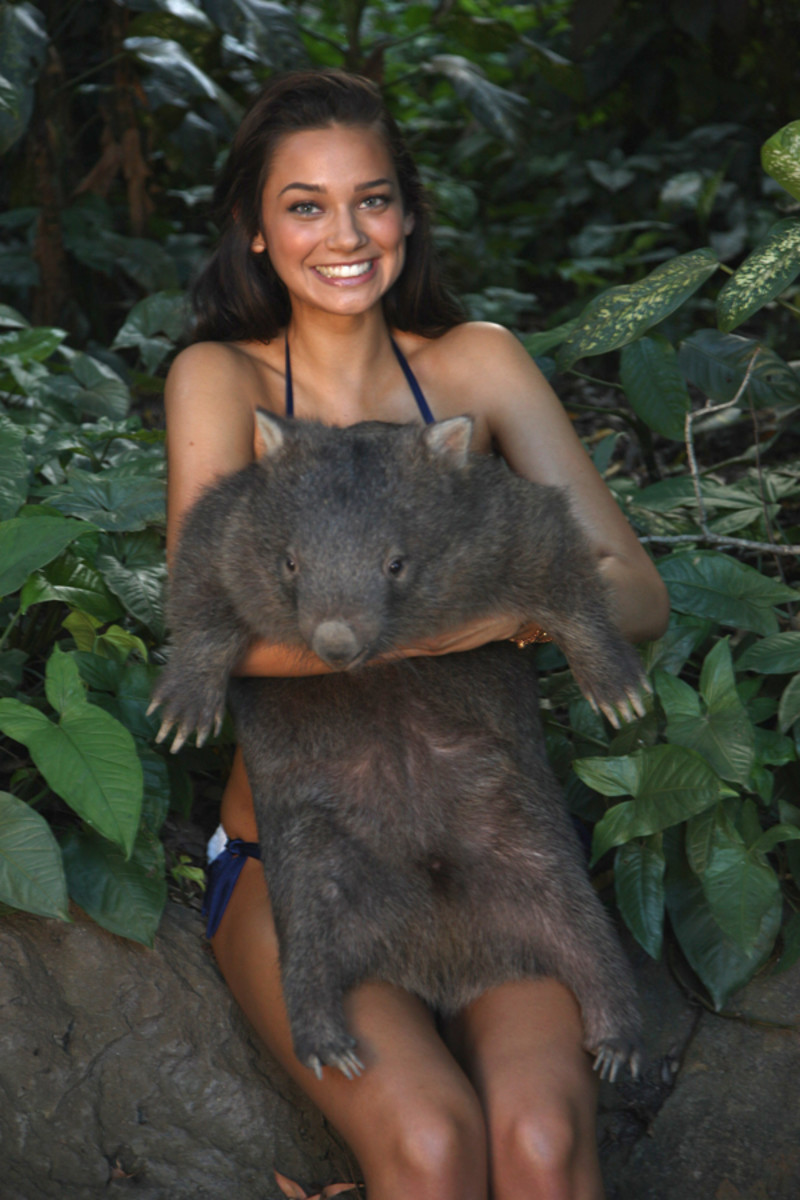 animals-michelle-v-wombat.jpg