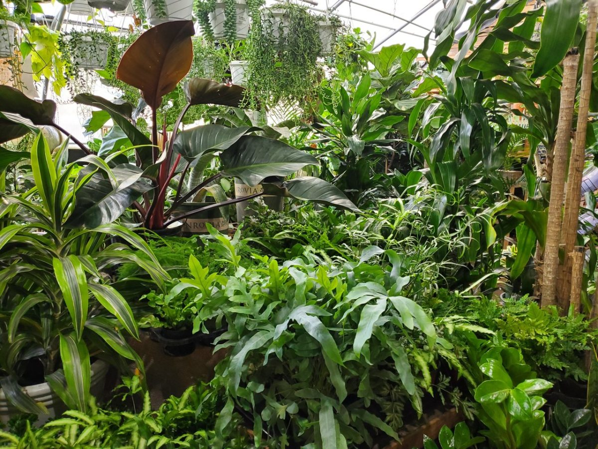 Photo courtesy of Urban Garden Center