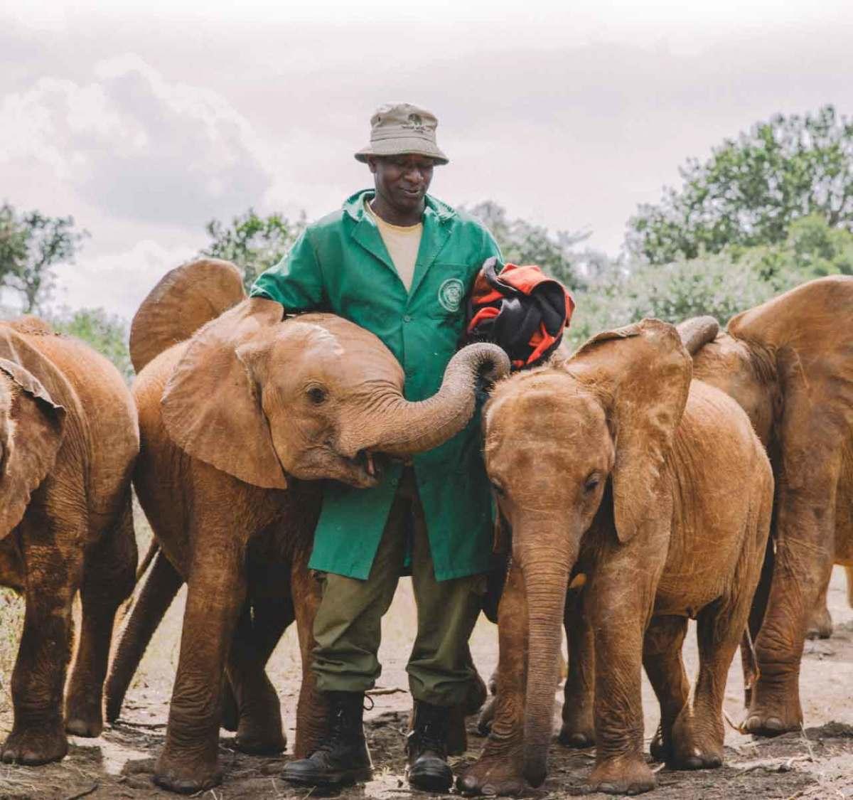 Photo courtesy of Sheldrick Wildlife Trust