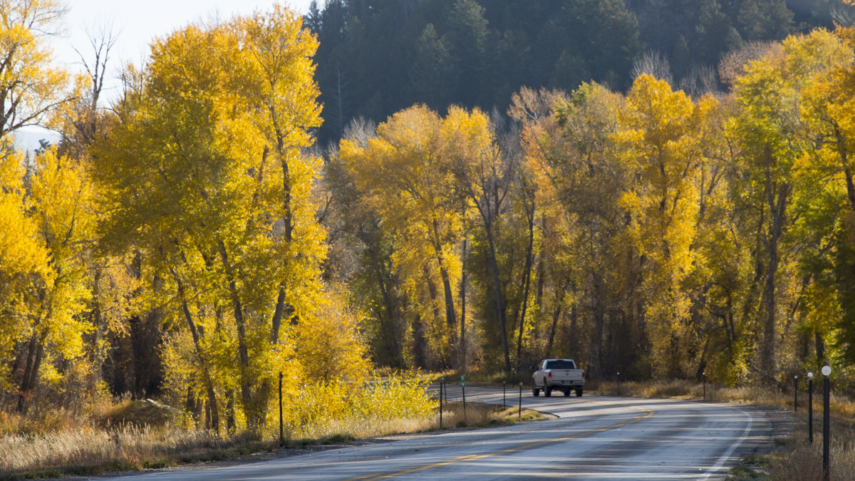 Fall-Leaves---WY-130---Carbon-County-_2_credit Wyoming Office of Tourism