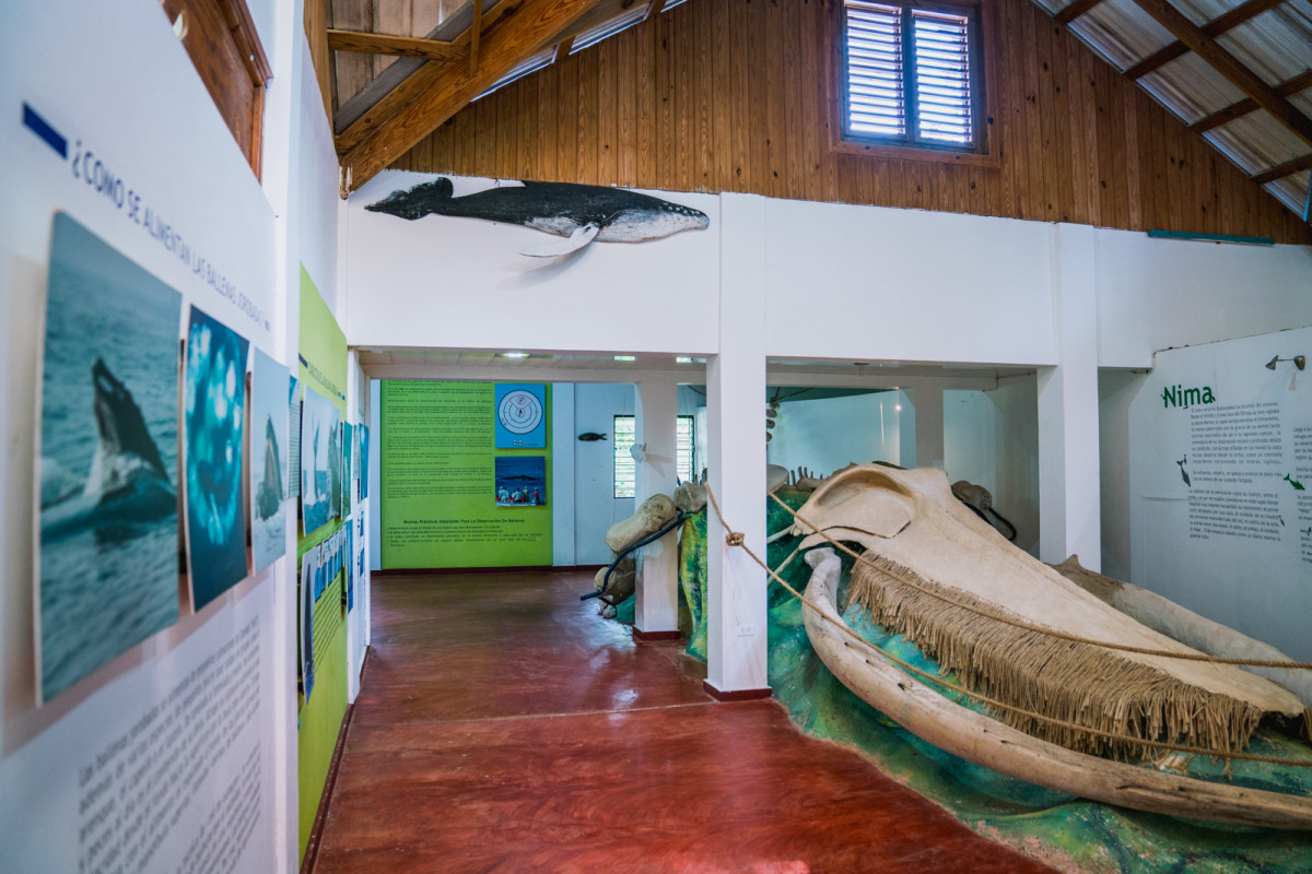 Whale Watching Museum_1:2