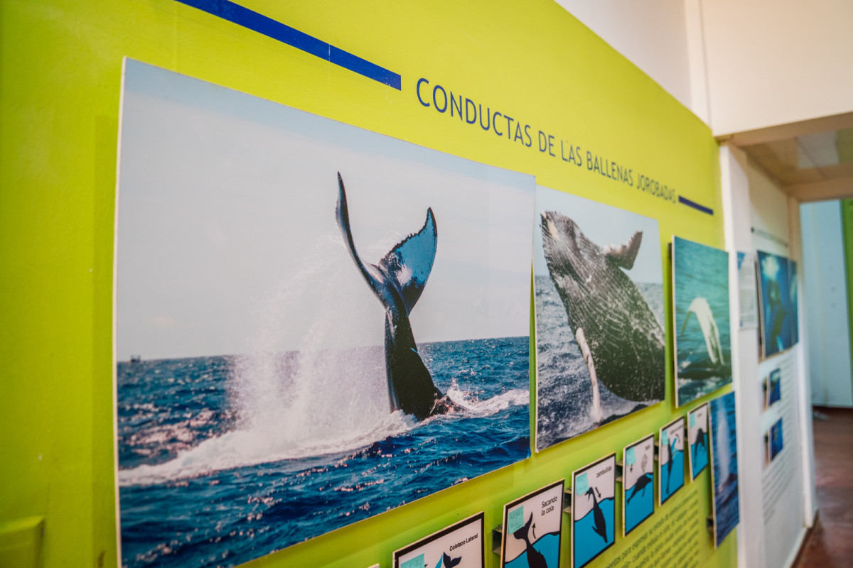Whale Watching Museum_2:2