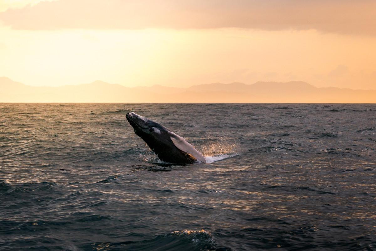 Whale Watching Samana Bay_1:2