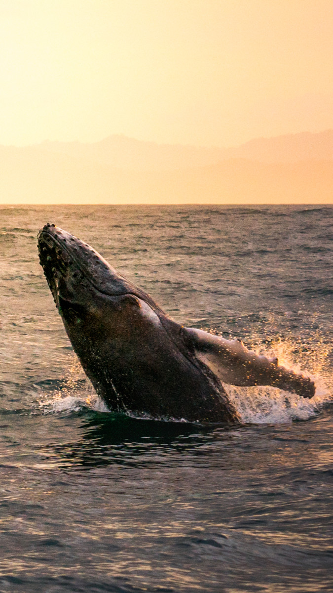 Whale Watching_Samana Bay_2:2