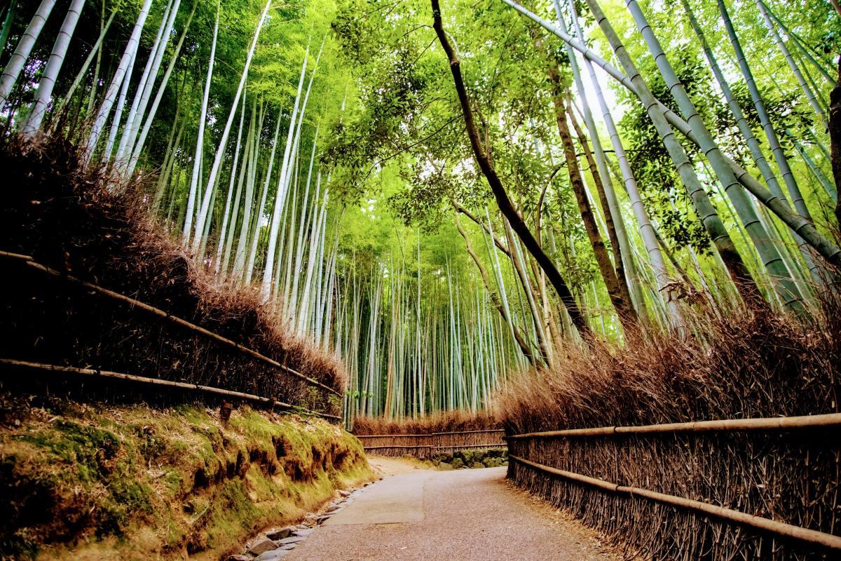 SwimTravel_DreamDestinations_Arashiyama_1